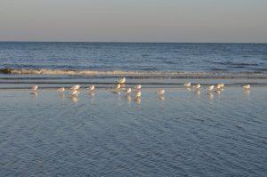 Ostseestrand mit Möwen im Winter © Stefanie Peller