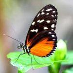 Schmetterling © Biosphäre Potsdam