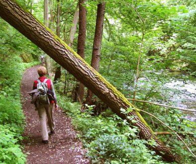 Bodetal Wanderweg