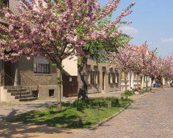 Tagestour Werder Havel