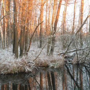 Eichwerder Moorwiesen