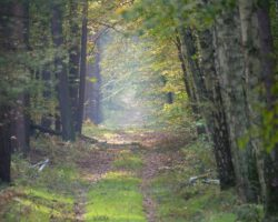 1440px-Track_in_the_Spandauer_Forst